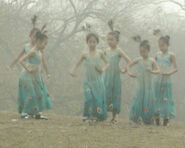 Peacockdancers
