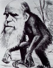 Darwin ape