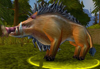 Elder Mountain Boar