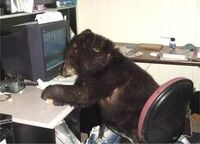 Bear at computer