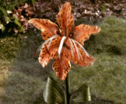 Tigerlily
