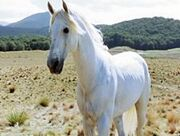 Shadowfax