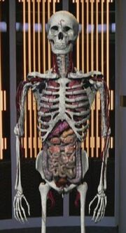 Harry Kim&#39;s organs, Latent Image