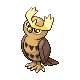 Noctowl DP