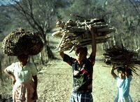 Collecting Fuelwood in Guatemala