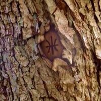 Tree mark