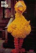 Bigbird2