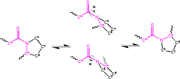Cis trans isomerization kinetics X Pro peptide bonds