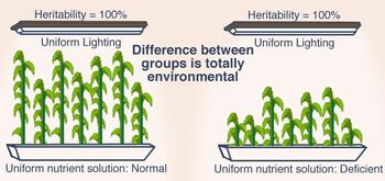 Heritability plants