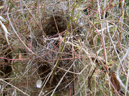 Bird nest in grass