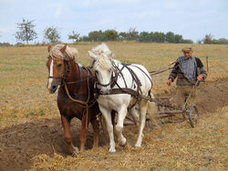 Farmer plowing