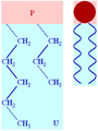 Basic lipid structure.png