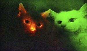 FluorescentCat