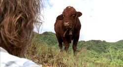 Franks Cow