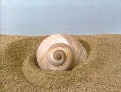 SnailShell