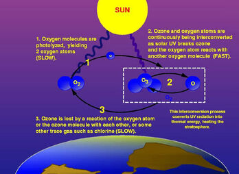 Ozone cycle