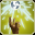 Image:Bane_Flare_icon.png