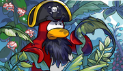Rockhopper island bush