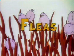 Fleas!