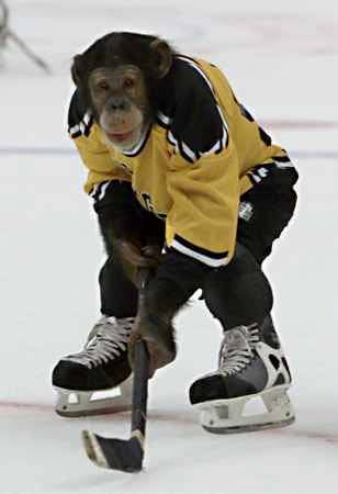 Ice_hockey_monkey.jpg