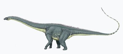 Diplodocus carng1DB