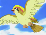 EP276 Pidgeot de la Oficial Jenny