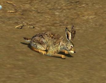 Lapin de garenne guild wars wikia - Cuisiner le lapin de garenne ...
