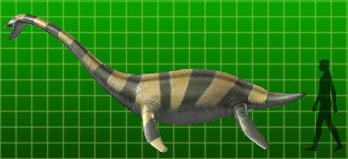 Muraenosaurus - Dinosaur King