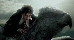 Buckbeak1