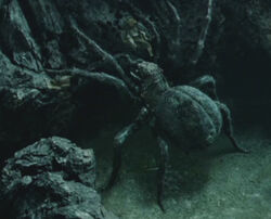 Shelob
