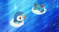 EP606 Piplup y Marill en el agua.png