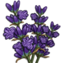 Lavender-icon