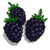 Blackberry-icon