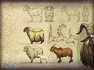 Thumb Sheep and Goat Artwork