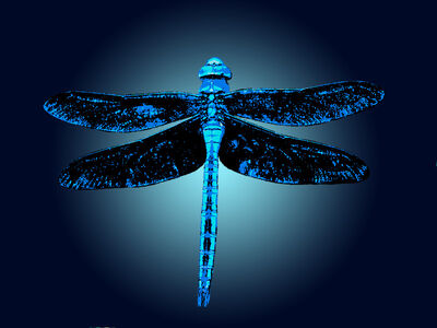 Dragonfly Fun Logo