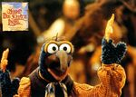 Muppets-DieSchatzinsel-LobbyCard-011