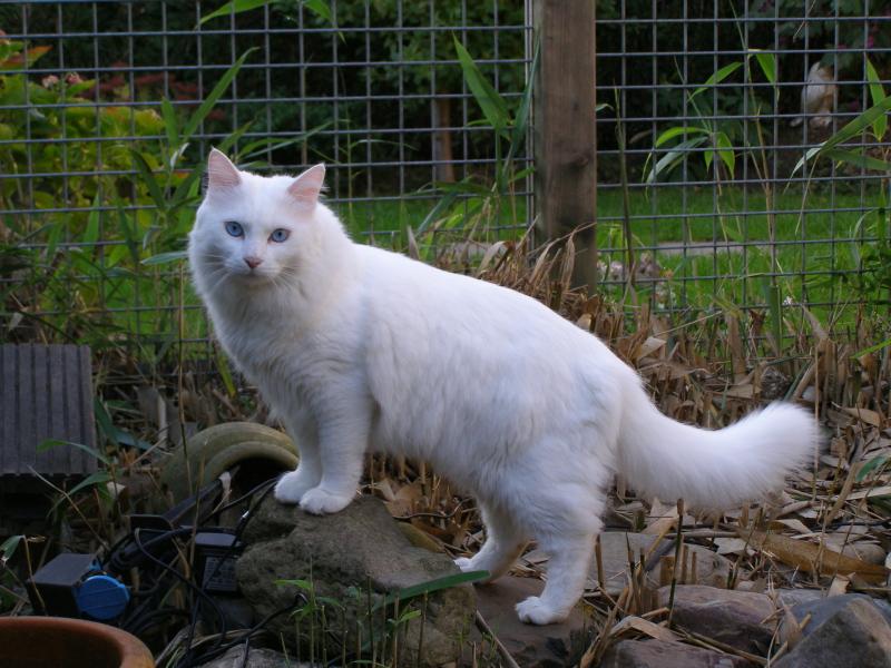 Http T Van Net Cat