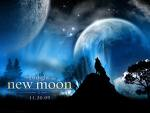 Moon and wolf nm