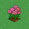 Perfect Pink Rose-icon