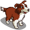 Border Collie Adult-icon