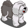 Sheep Dog Adult Gray-icon