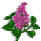 Lilac-icon