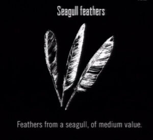 Animals Seagull Feathers