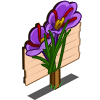 Saffron Mastery Sign-icon