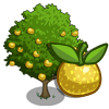 Asian Pear Tree-icon