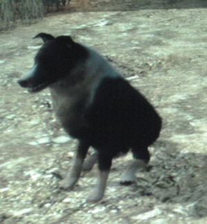 http://images1.wikia.nocookie.net/__cb20100625062310/reddeadredemption/images/thumb/b/bb/Rdr_perro.jpg/300px-Rdr_perro.jpg