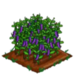 Purple Podded Pea 100
