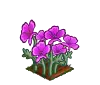 Perfect Purple Poppies-icon