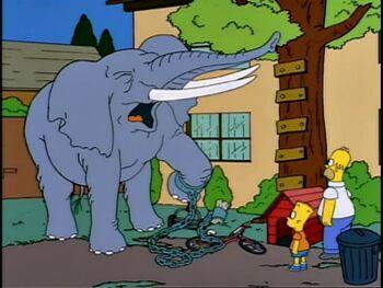 350px-Elephant.jpg