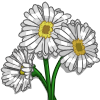 White Daisies